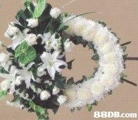 88DB.com  flower arranging