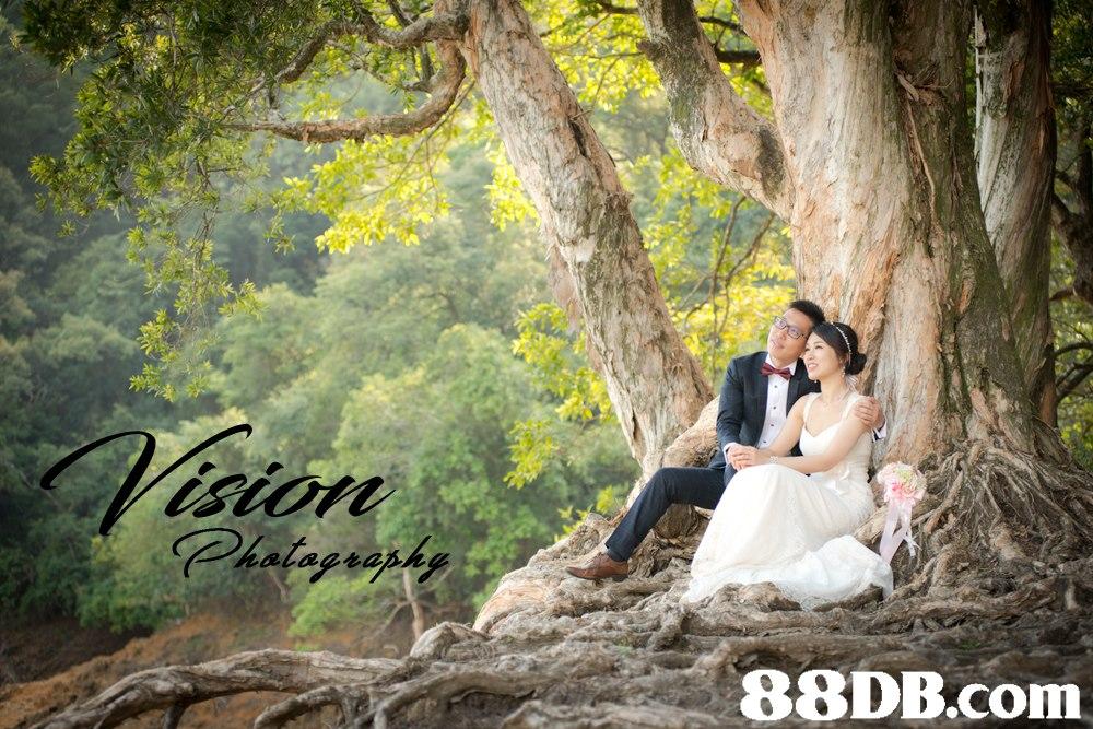 88DB.com  photograph