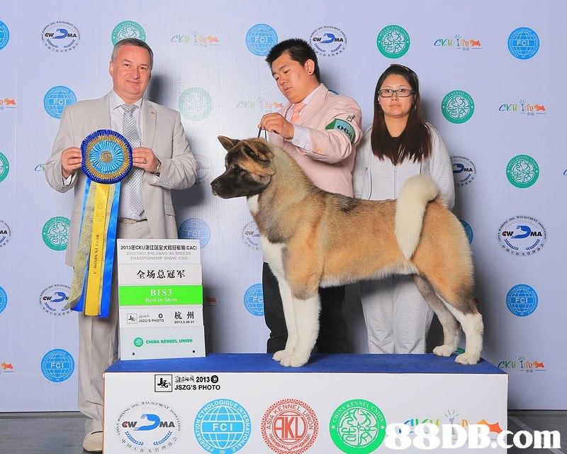 2013ECKU浙江区宝天11牙军爰ICAC 全场总冠军 BIS3 Best in Show CHINA KENNEL UNION 42013C JSZG'S PHOTO MA 88DB. com FCI  dog,dog breed group,dog like mammal,dog breed,