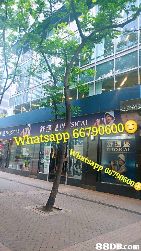 PHYSICAL Whatsapp 667906000 舒適堡 PHYSICAL 6 88DB.com  tree