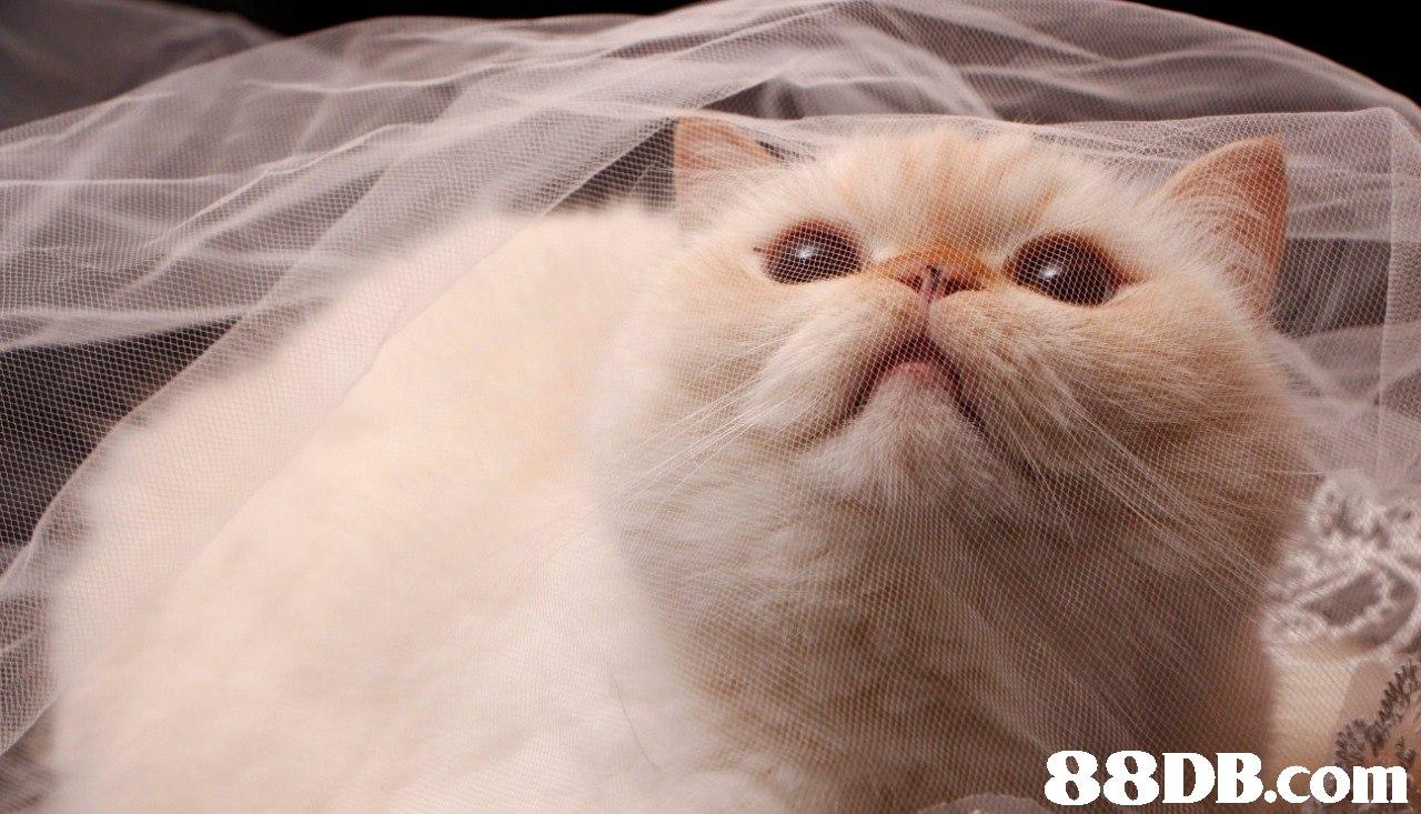 88DB.com  cat