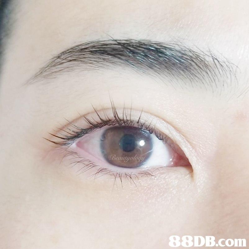 Beautyolod 88DB.com  eyebrow
