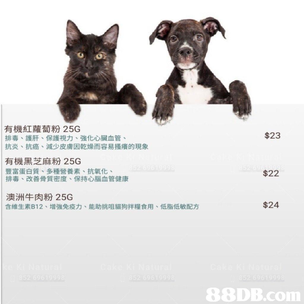 有機紅蘿蔔粉25G $23 排毒、護肝、保護視力、強化心臟血管 抗炎、抗癌、減少皮膚因乾燥而容易搔癢的現象 有機黑芝麻粉25G 豐富蛋白質、多種營養素、抗氧化、 排毒、改善骨質密度、保持心腦血管健康 $22 |澳洲牛肉粉25G 含維生素B12、增強免疫力、能助挑咀貓狗拌糧食用、低脂低敏配方 $24   dog,dog like mammal,dog breed,puppy,snout