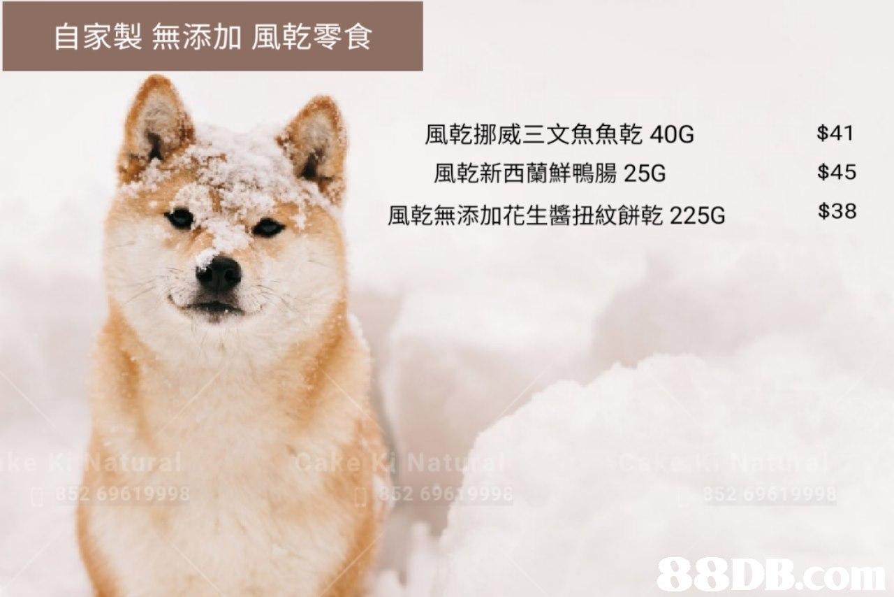 自家製無添加風乾零食 風乾挪威三文魚魚乾40G 風乾新西蘭鮮鴨腸25G 風乾無添加花生醬扭紋餅乾225G $41 $45 $38  dog like mammal,dog breed,dog breed group,fauna,dog