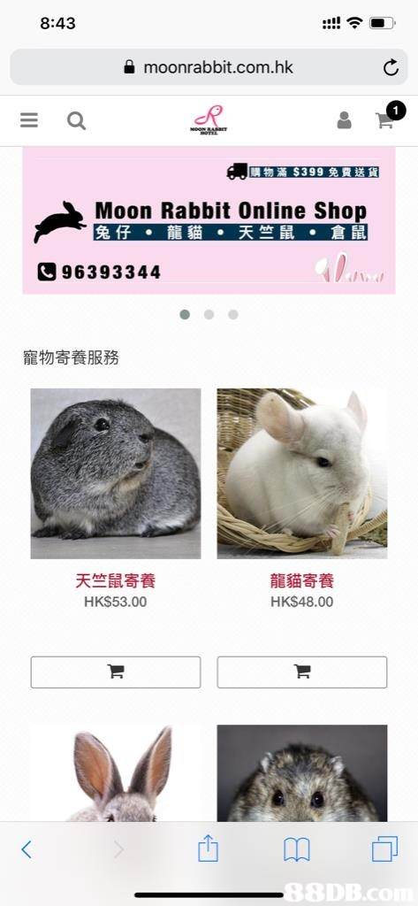 8:43 moonrabbit.com.hk 購物滿$399免費送貨 Moon Rabbit Online Shop 兔仔.龍貓·天竺鼠·倉鼠 96393344 寵物寄養服務 天竺鼠寄養 HKS53.00 龍貓寄養 HKS48.00 8DB.C  fauna,organism,website,snout,font
