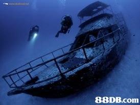 shipwreck,mode of transport,submarine,marine biology,organism