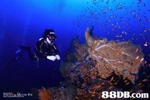 divemaster,underwater,marine biology,aquanaut,organism