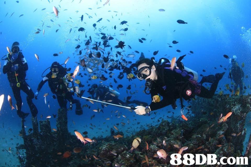 underwater diving,scuba diving,divemaster,marine biology,diving equipment