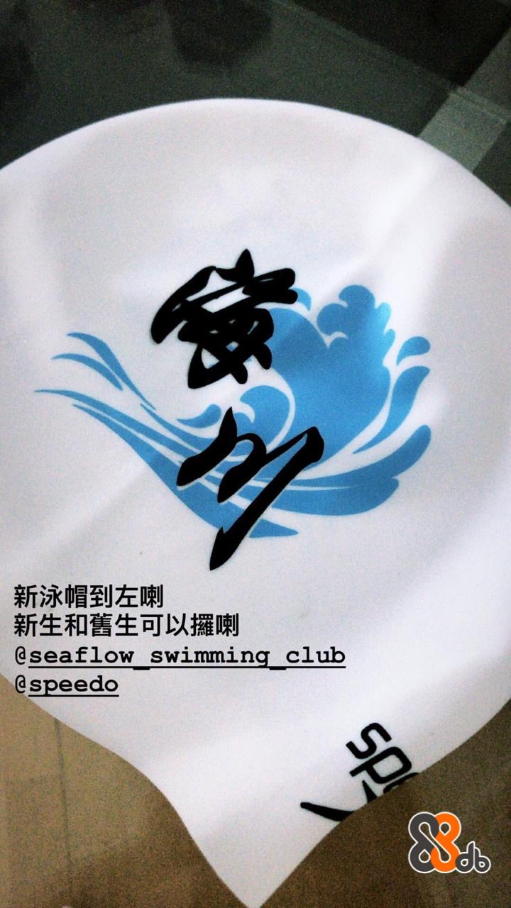 新泳帽到左喇 新生和舊生可以攞喇 @seaflow swimming club speedo  font,