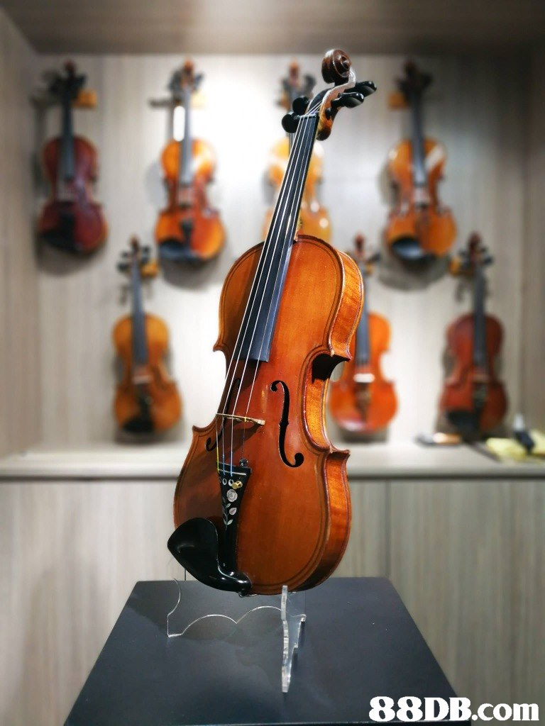 musical instrument,string instrument,violin family,violin,cello
