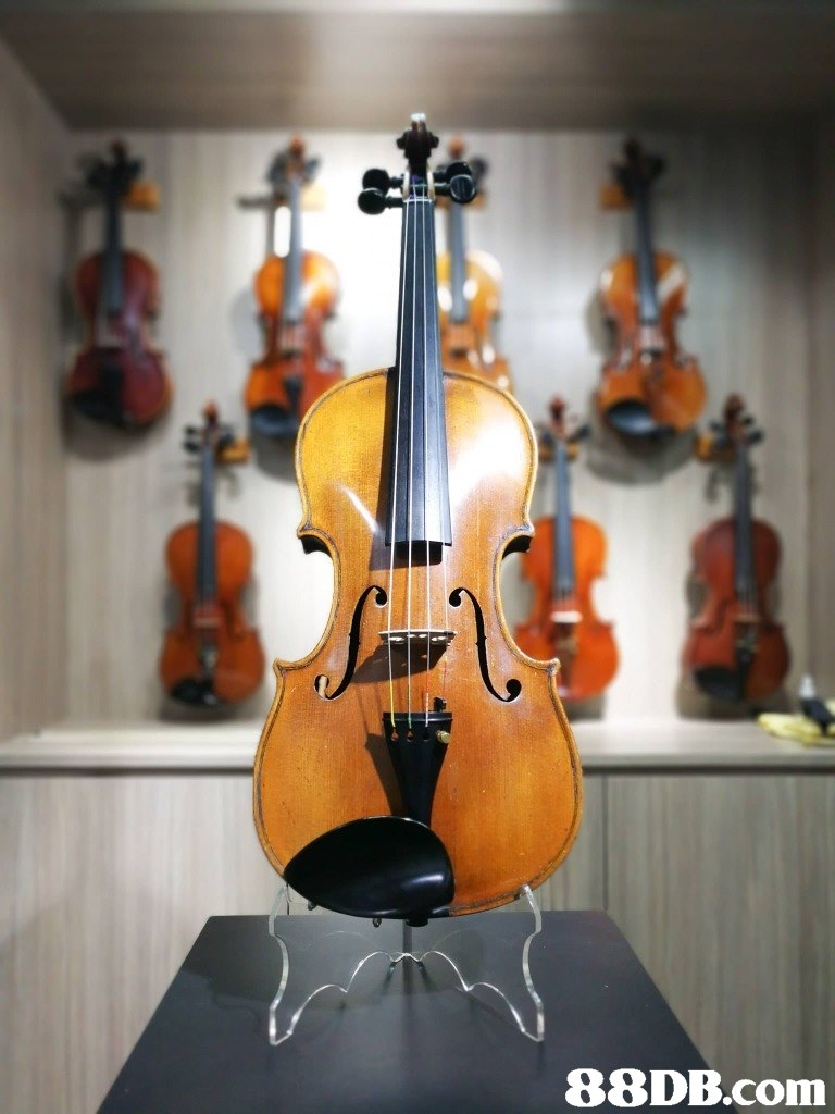 musical instrument,violin,violin family,string instrument,bowed string instrument