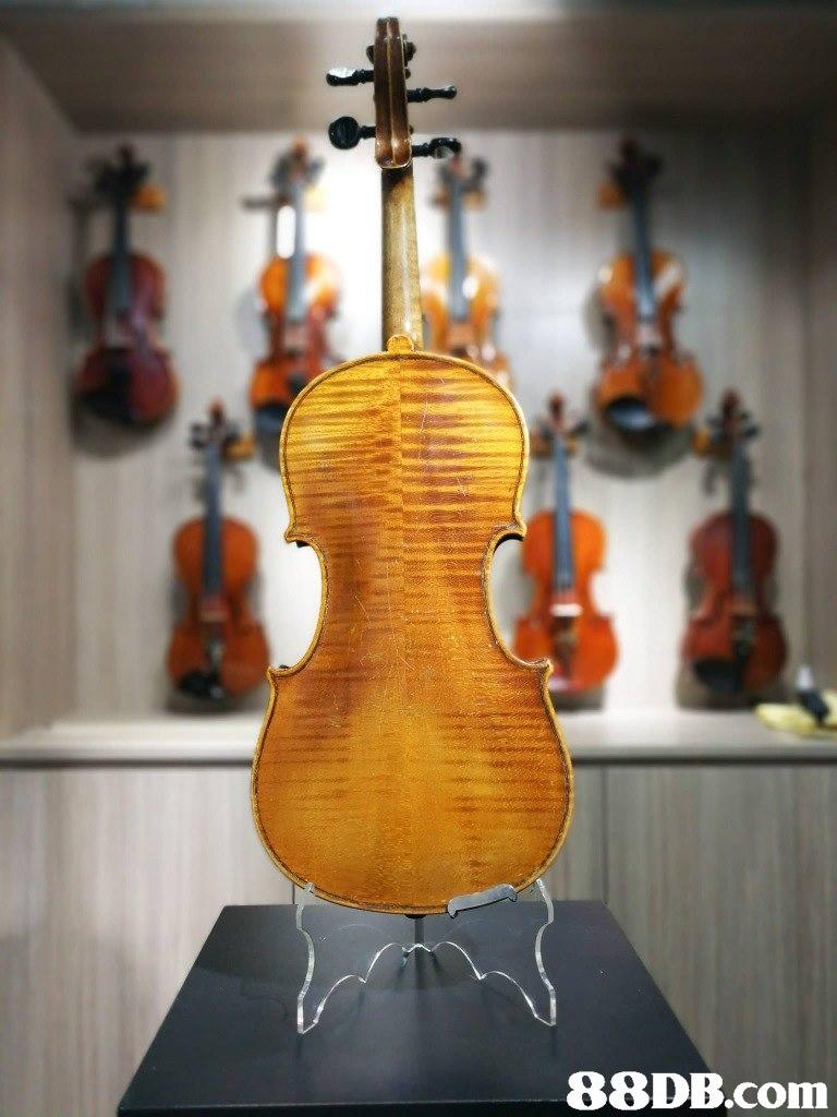 musical instrument,violin family,violin,string instrument,string instrument