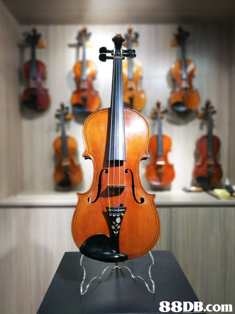 musical instrument,violin,violin family,string instrument,string instrument