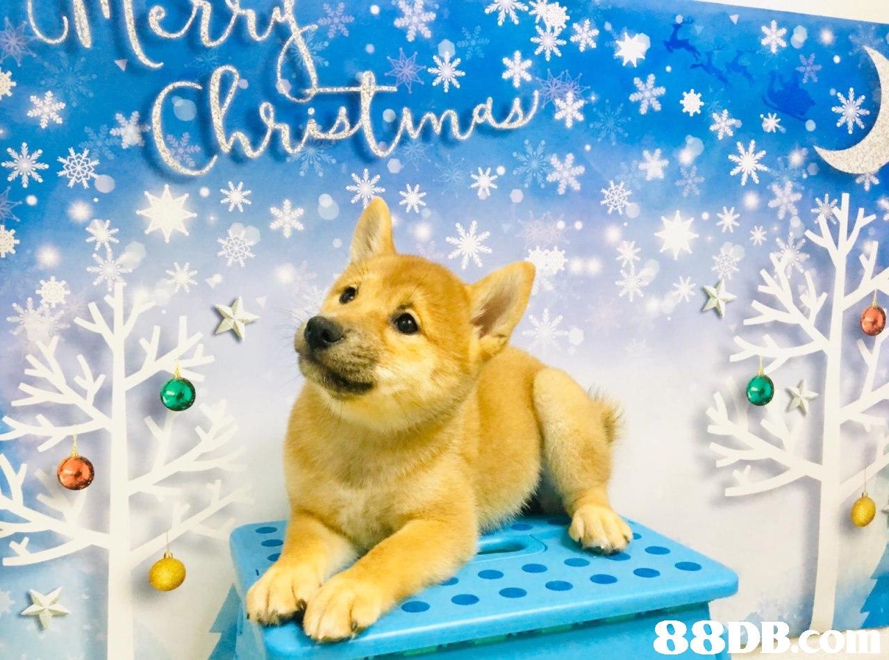 88DB,dog,dog like mammal,dog breed,mammal,dog breed group