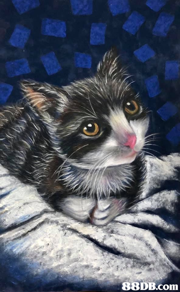 cat,whiskers,small to medium sized cats,painting,fauna