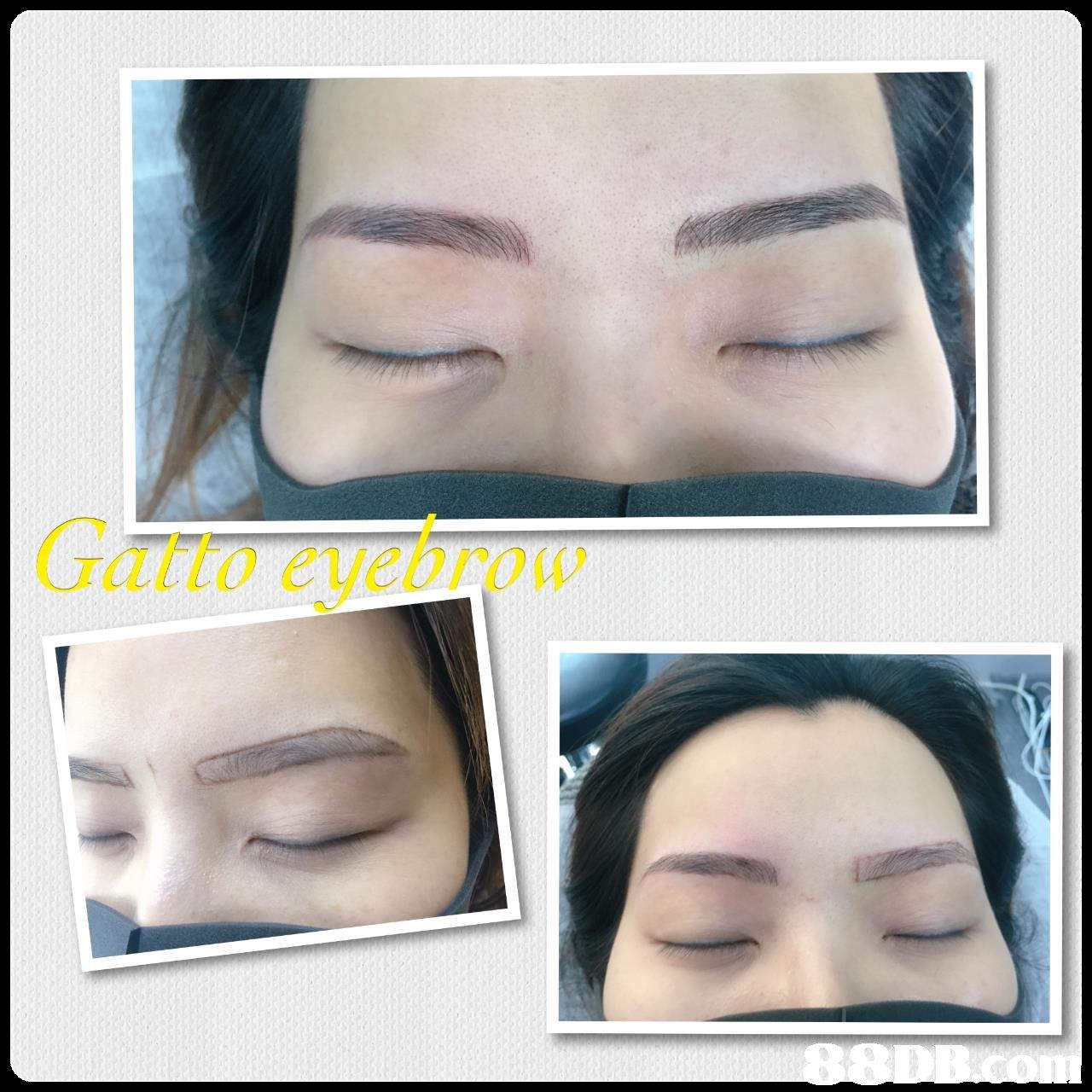 Gatto eyebro  eyebrow,eyelash,nose,forehead,chin