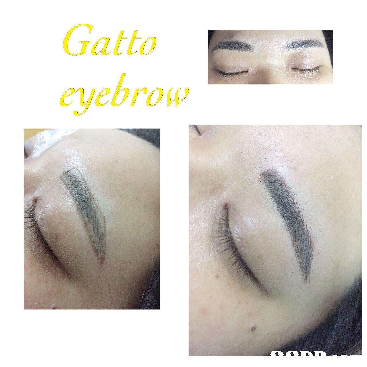 Gatto eyebrow  eyebrow,nose,eye,eyelash,eye shadow