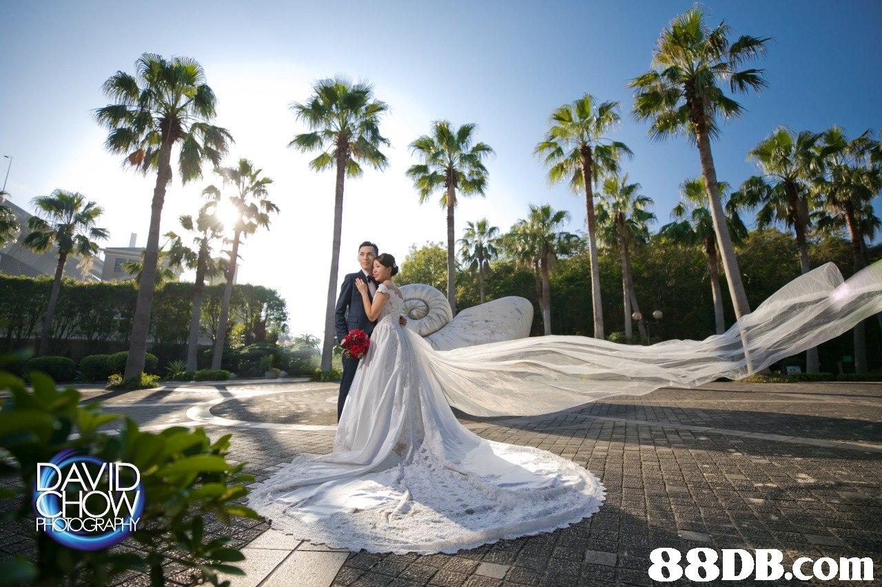 photograph,photography,wedding,bride,wedding dress