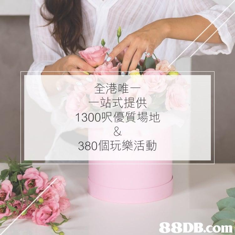 全港唯 一站式提供 1300呎優質場地 380個玩樂活動   pink,flower,shoulder,petal,flower arranging