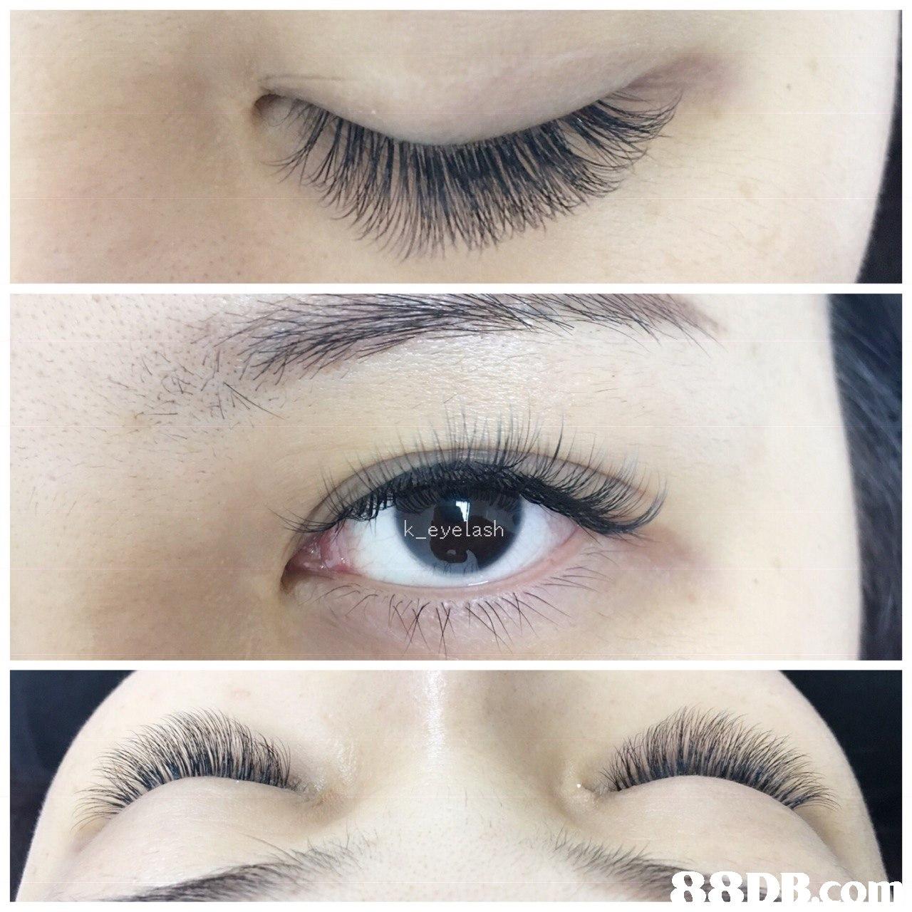 k_eyelash  eyebrow,eyelash,cosmetics,eye,eye shadow