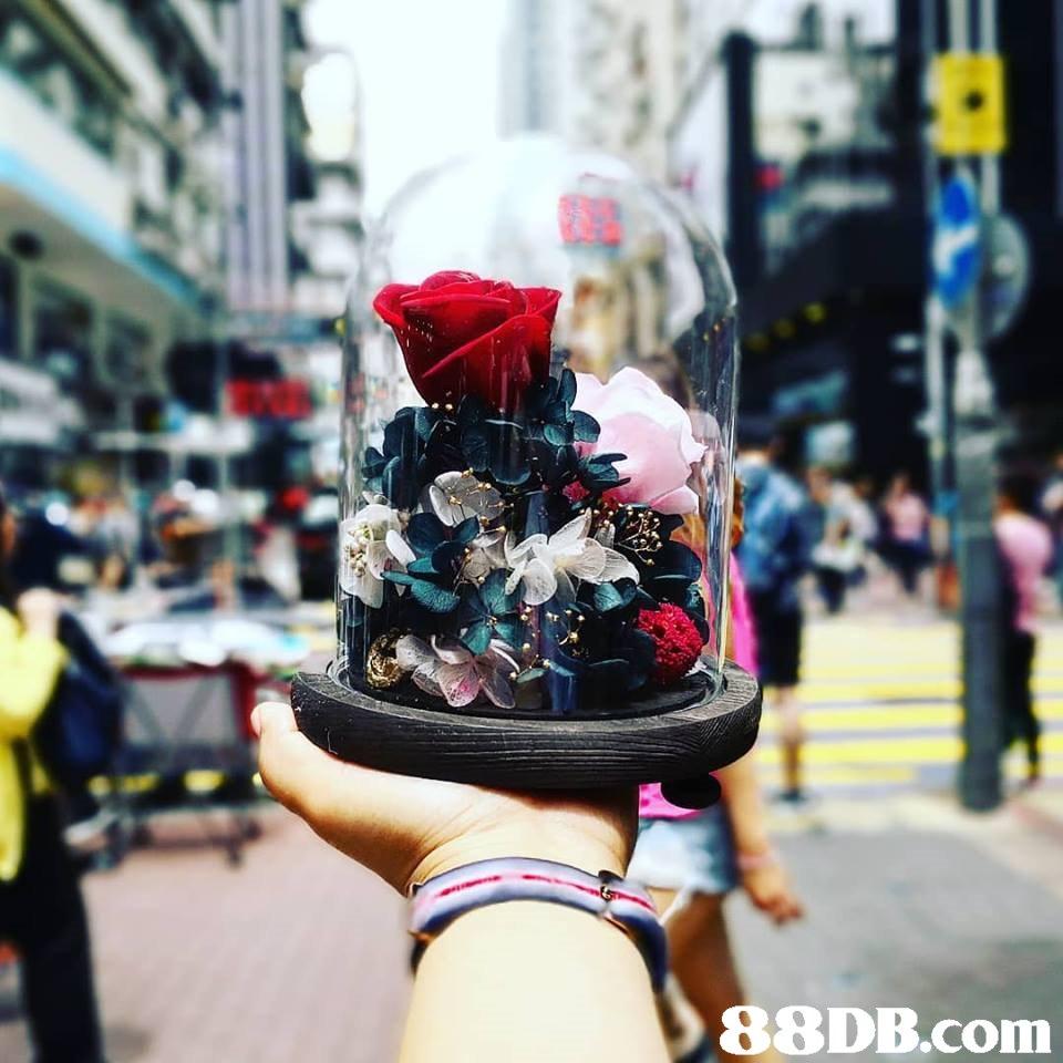 fashion accessory,street,headgear,product,