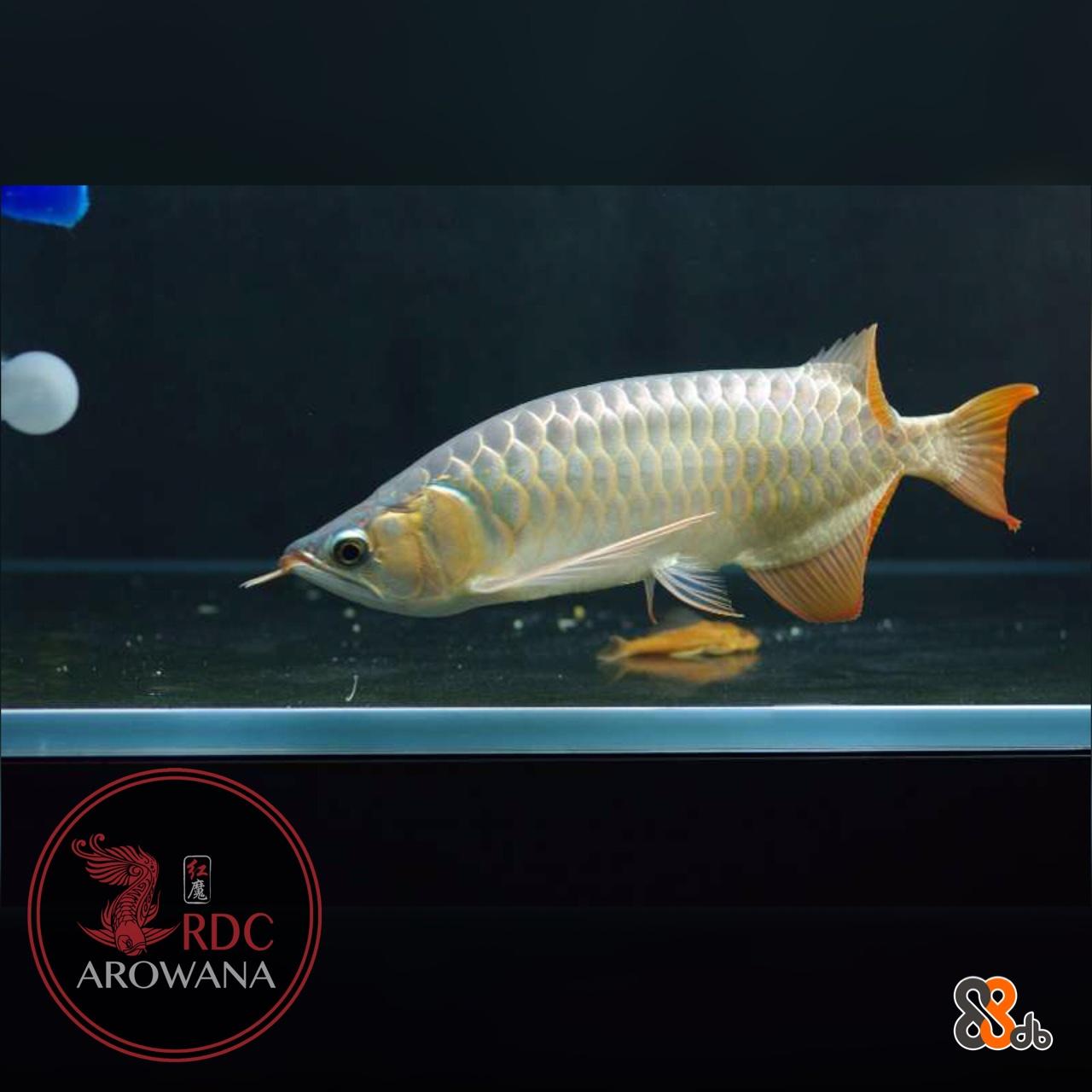 fish,fish,fauna,water,marine biology