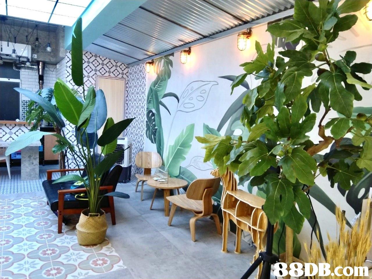 2 B8DB.com  plant,flora,real estate,leisure,interior design