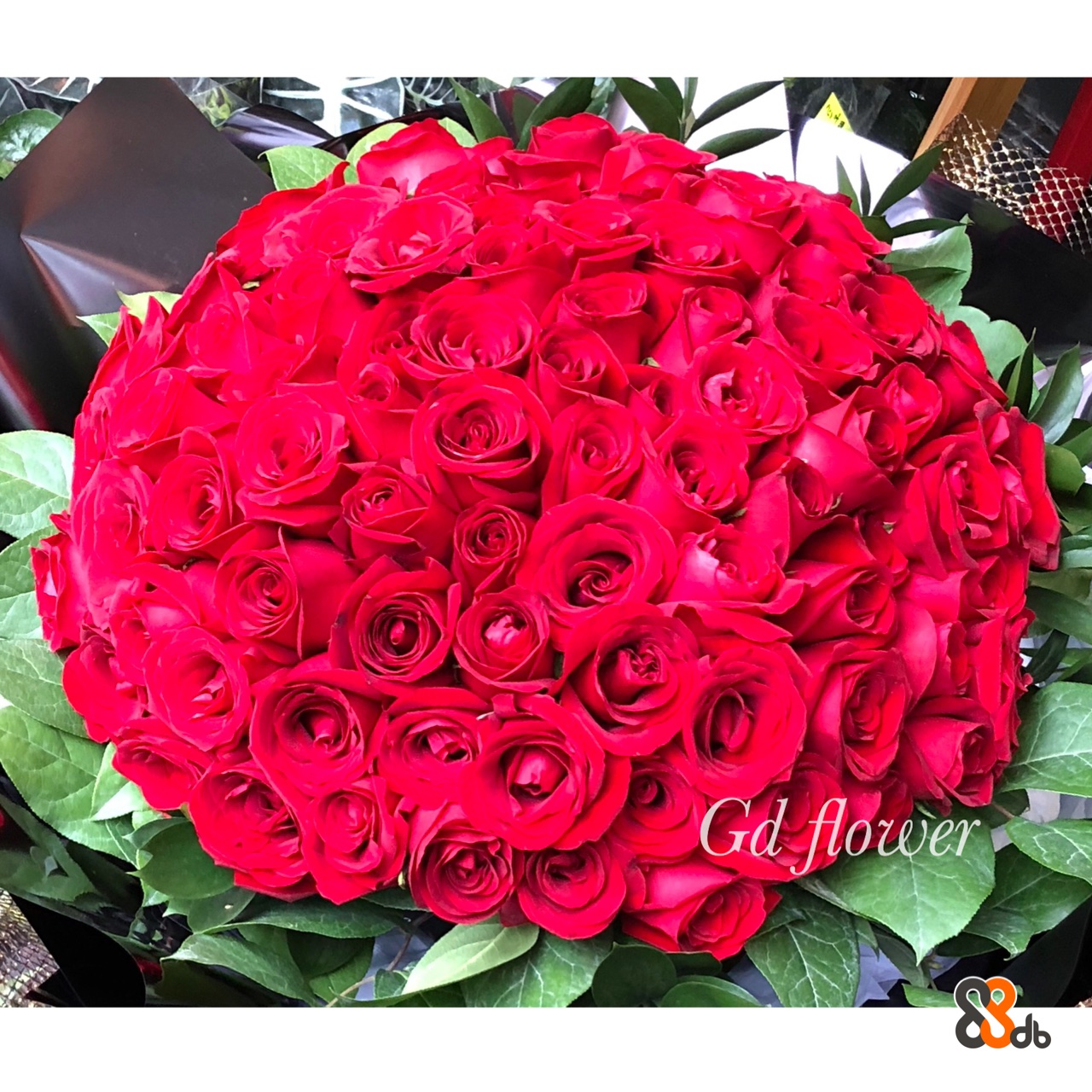 Gd lower db  flower,rose,garden roses,flower bouquet,rose family