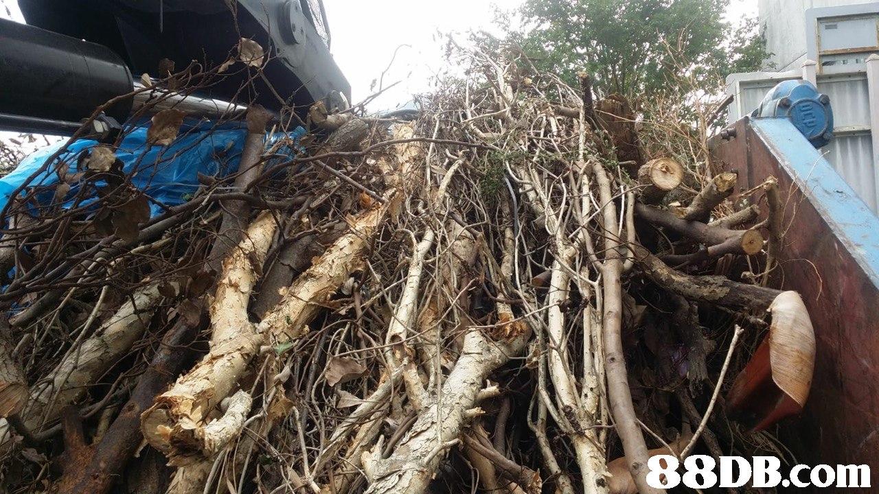 tree,scrap,plant,