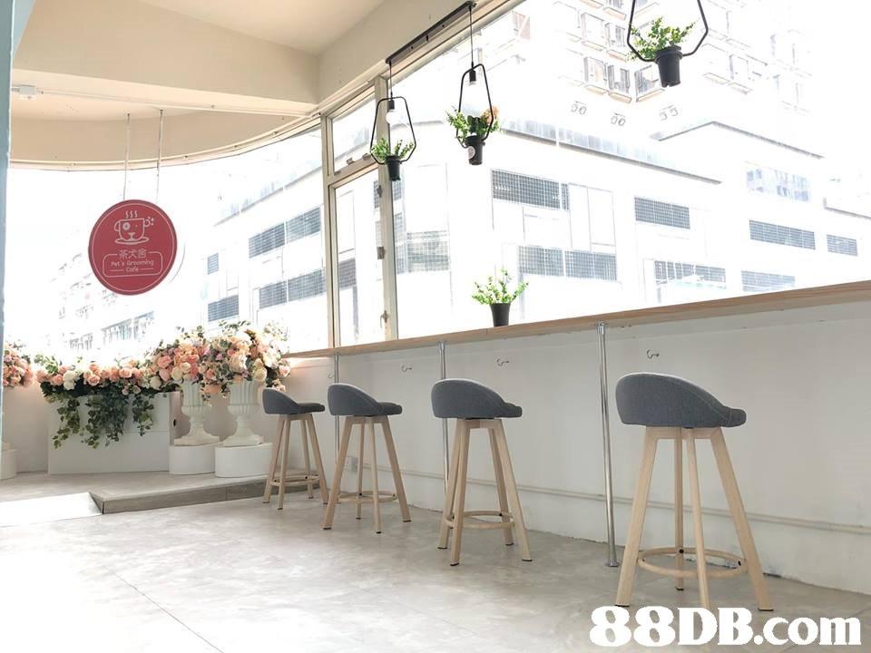 5000 茶犬舍   property,table,furniture,interior design,floor