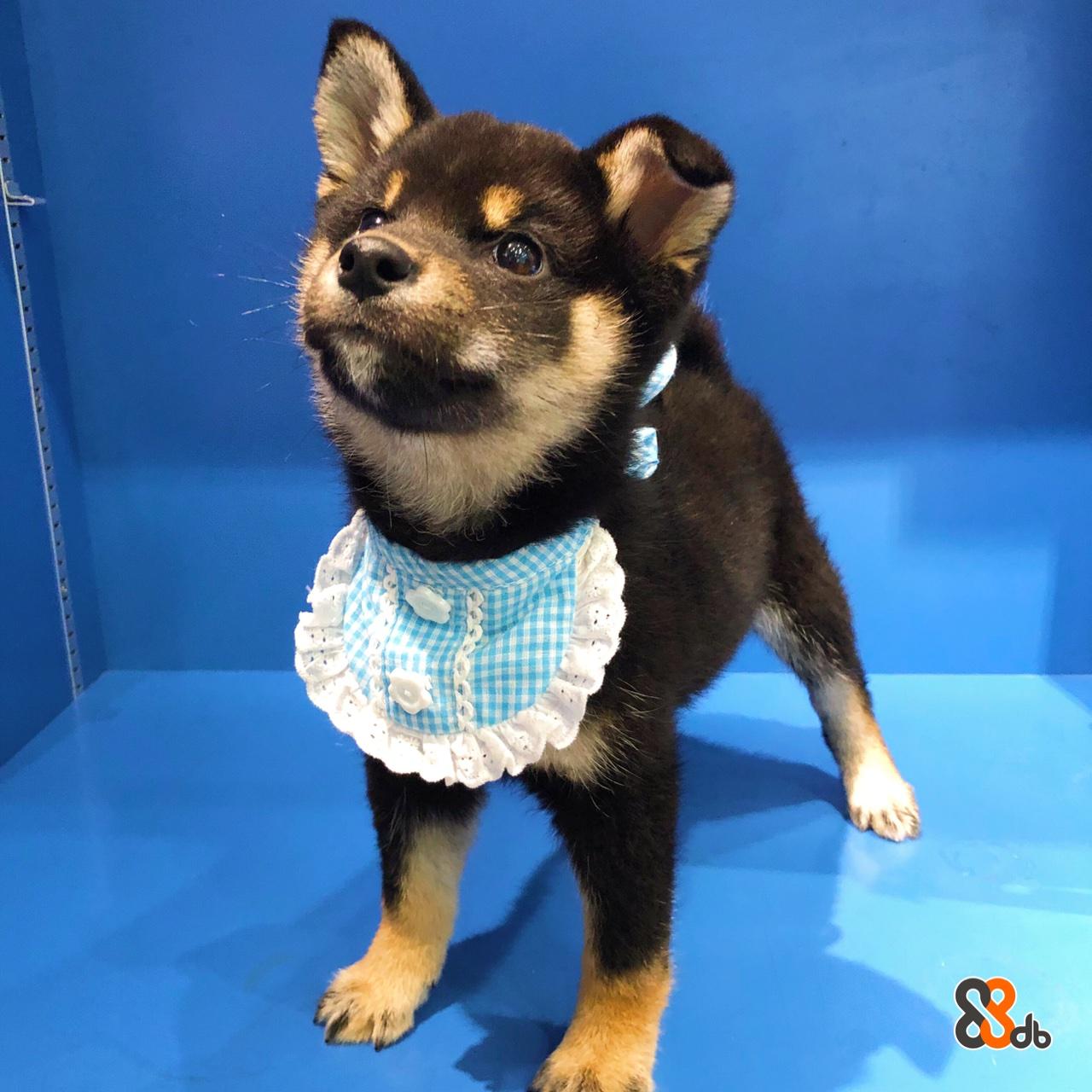 Dog,Mammal,Vertebrate,Dog breed,Canidae