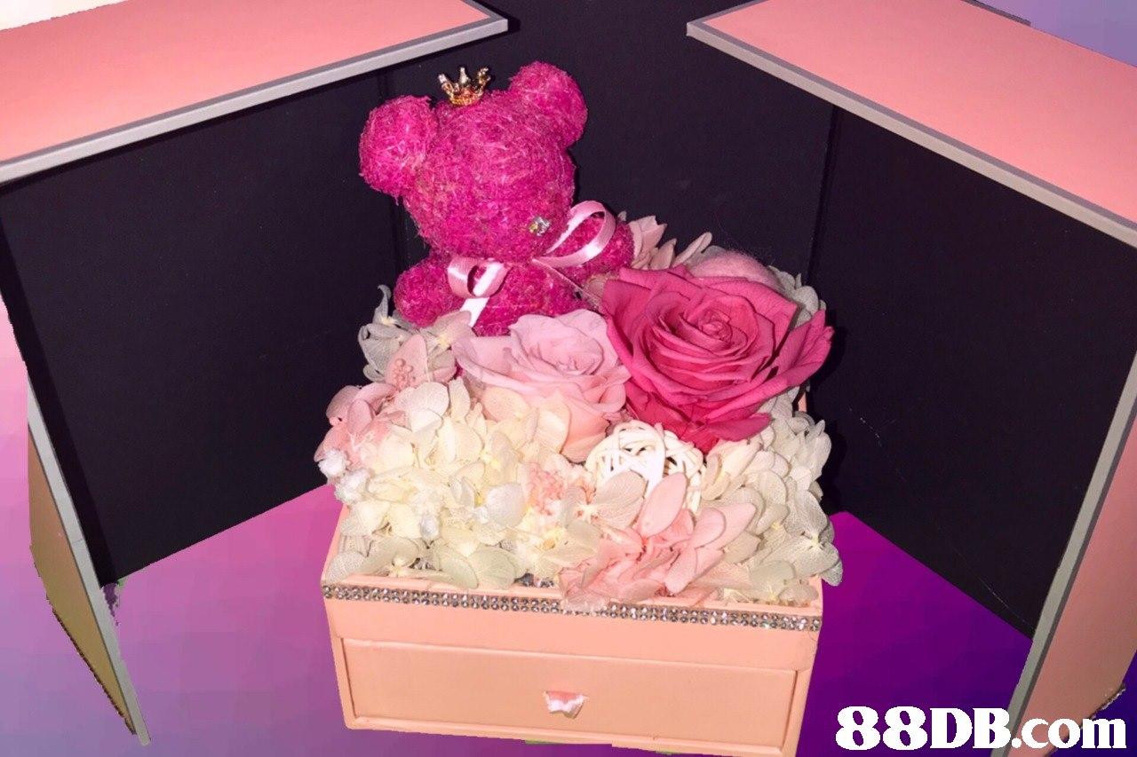 Pink,Flower,Petal,Cut flowers,Rose