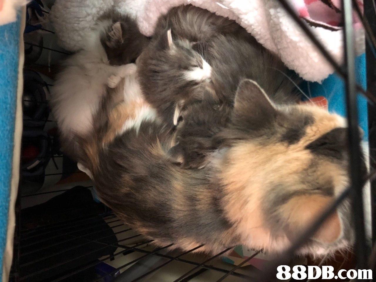 Cat,Animal shelter,
