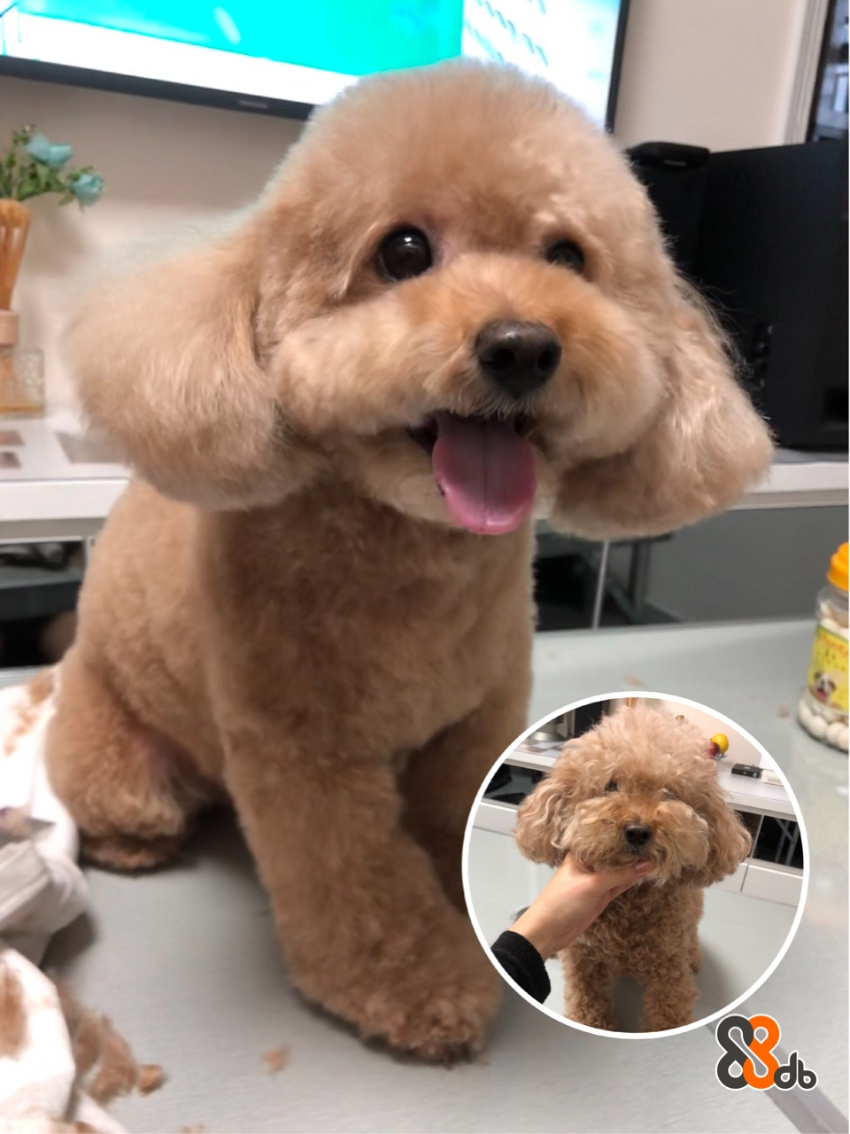 oric 身前後  dog like mammal,dog,dog breed,stuffed toy,puppy