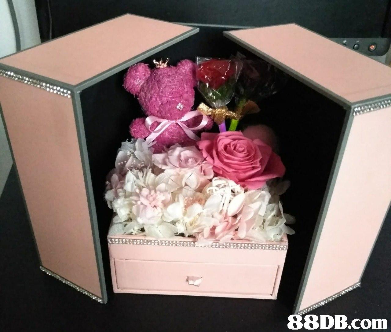 Pink,Flower,Cut flowers,Petal,Rose