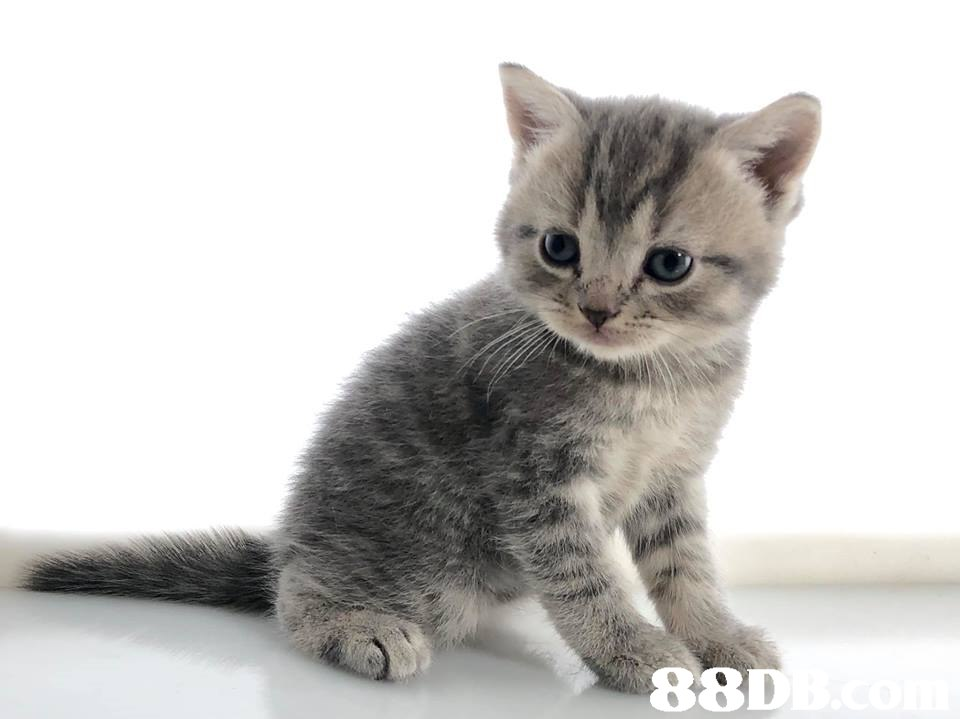 88D  Cat,Mammal,Vertebrate,Small to medium-sized cats,Felidae
