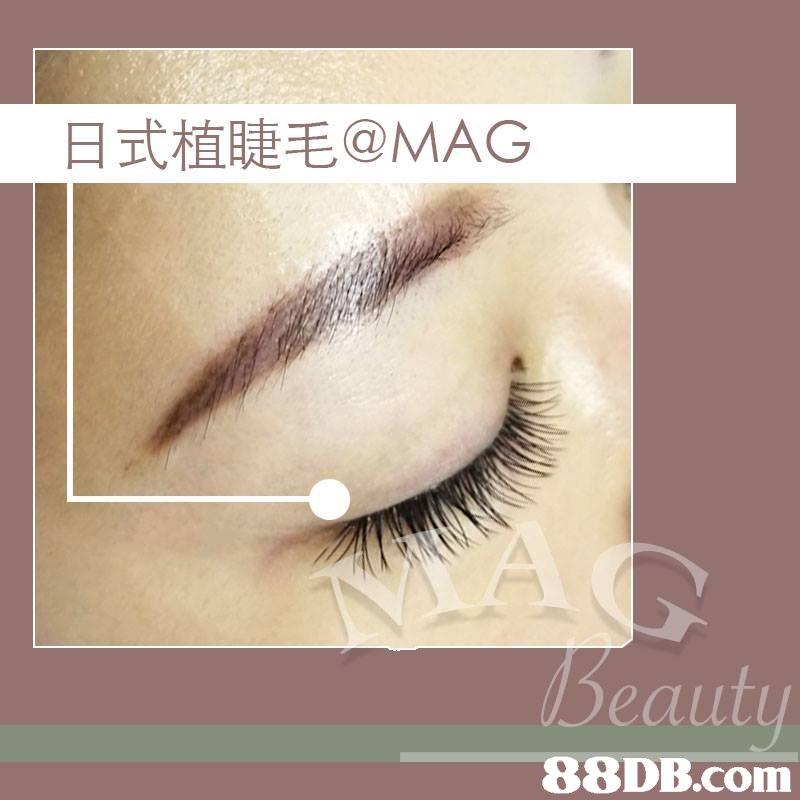 日式植睫毛@MAG Beaut   Eyelash,Eyebrow,Eye,Cosmetics,Organ
