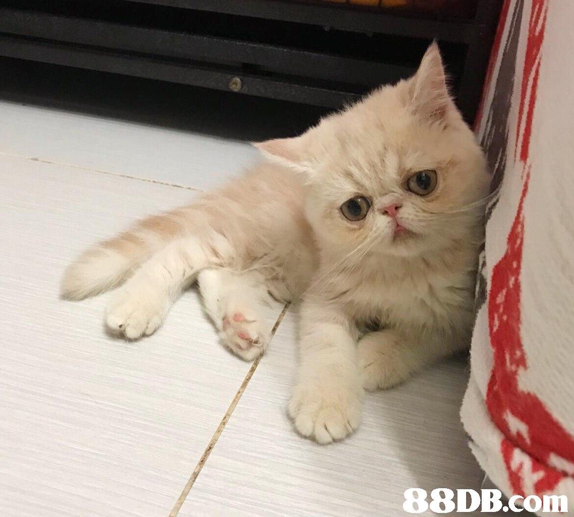 In  Cat,Mammal,Vertebrate,Small to medium-sized cats,Felidae