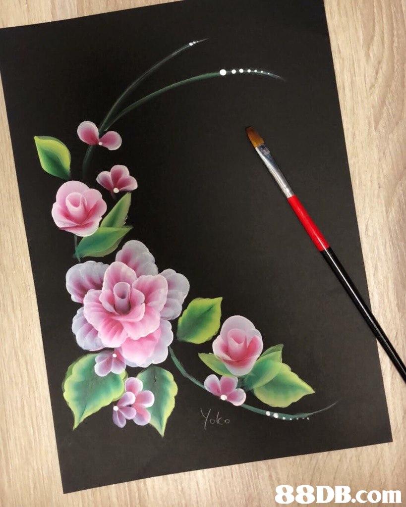 Pink,Flower,Petal,Plant,Paper
