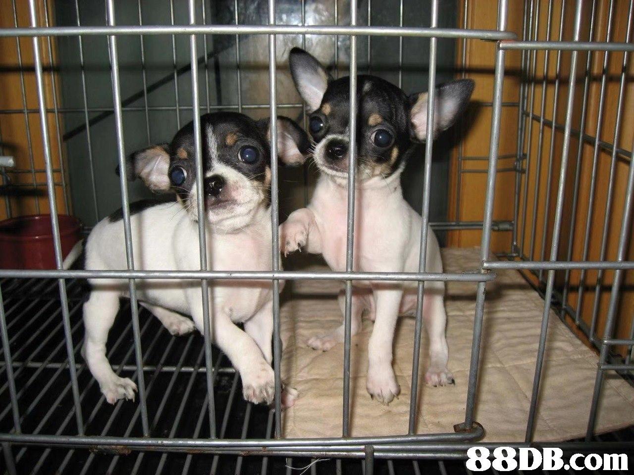 Mammal,Dog,Vertebrate,Canidae,Dog breed