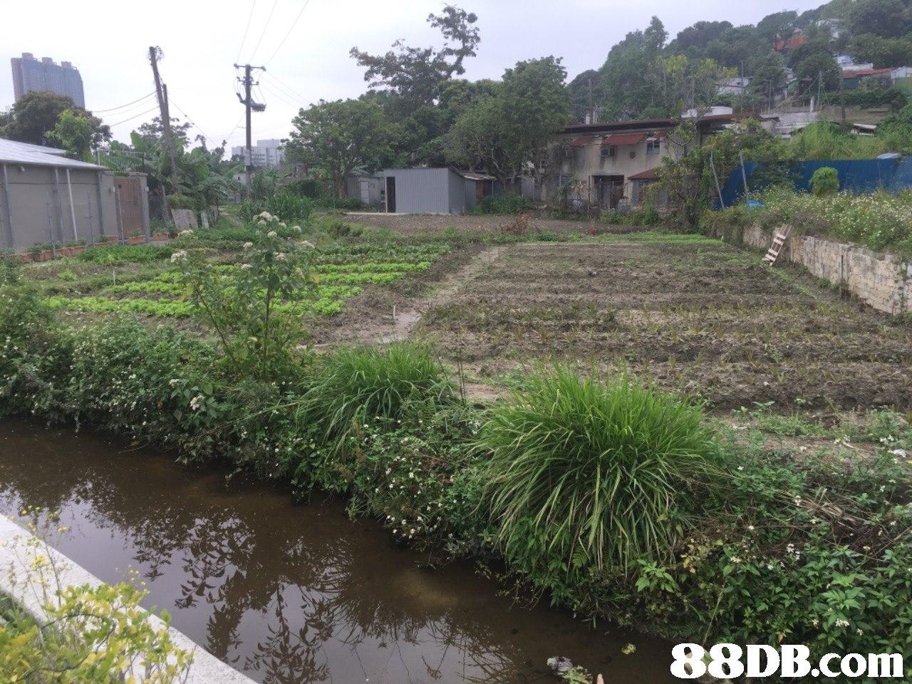 Waterway,Land lot,Water resources,Bank,Property