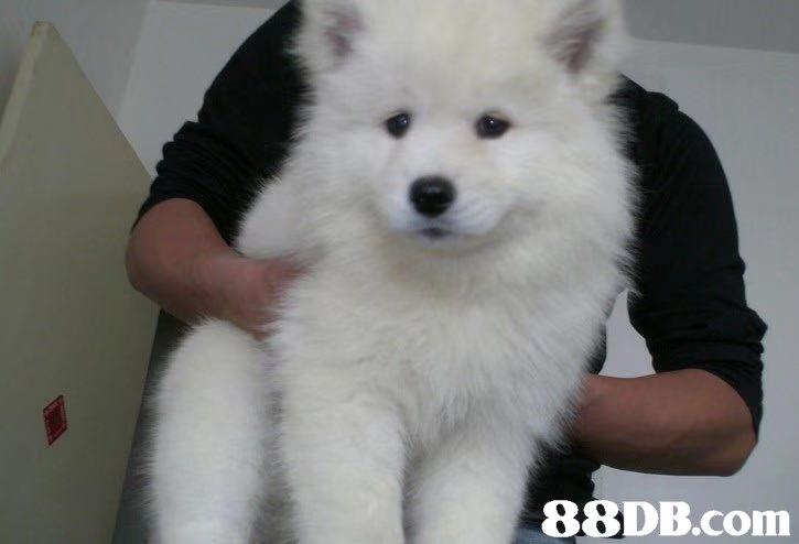 Dog,Mammal,Vertebrate,Canidae,Dog breed