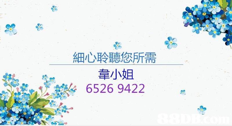 細心聆聽您所需 韋小姐 6526 9422  Text,Font,Plant,Graphics,