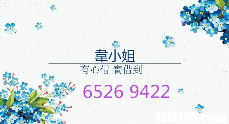 韋小姐 有心借實借到 6526 9422  Text,Font,Graphics,Logo,Plant
