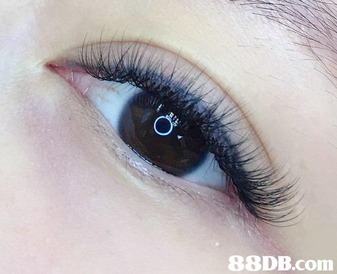 Eyebrow,Eyelash,Eye,Face,Skin