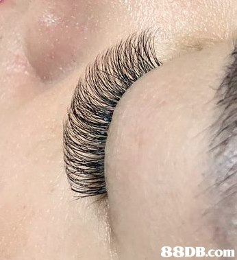 Eyelash,Eyebrow,Eye,Skin,Close-up