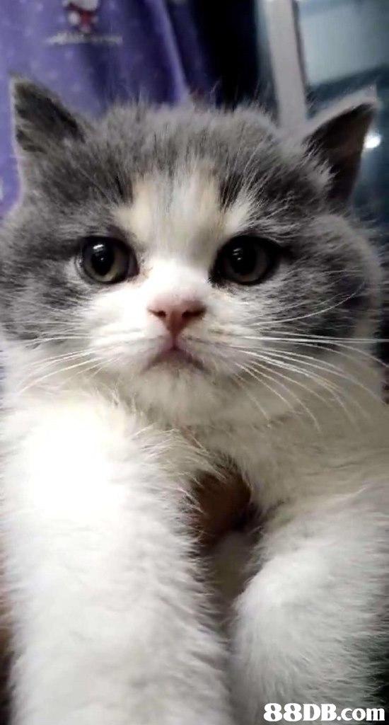 Cat,Mammal,Vertebrate,Small to medium-sized cats,Whiskers