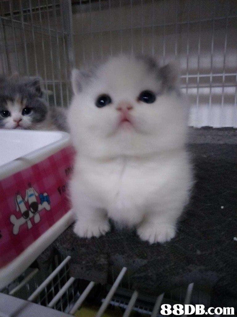 ove   Cat,Mammal,Vertebrate,Small to medium-sized cats,Felidae