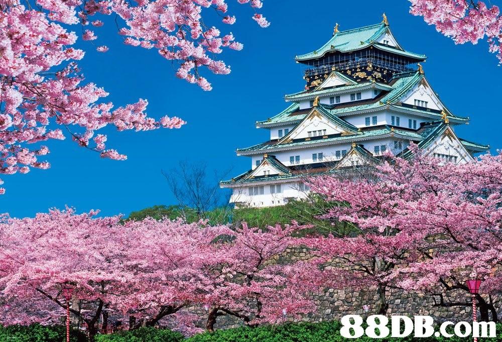 88DB.coT  Flower,Landmark,Tree,Blossom,Spring