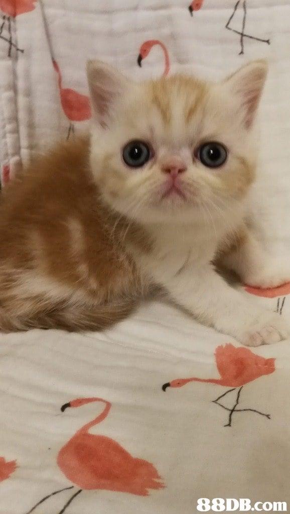 Cat,Mammal,Small to medium-sized cats,Whiskers,Felidae
